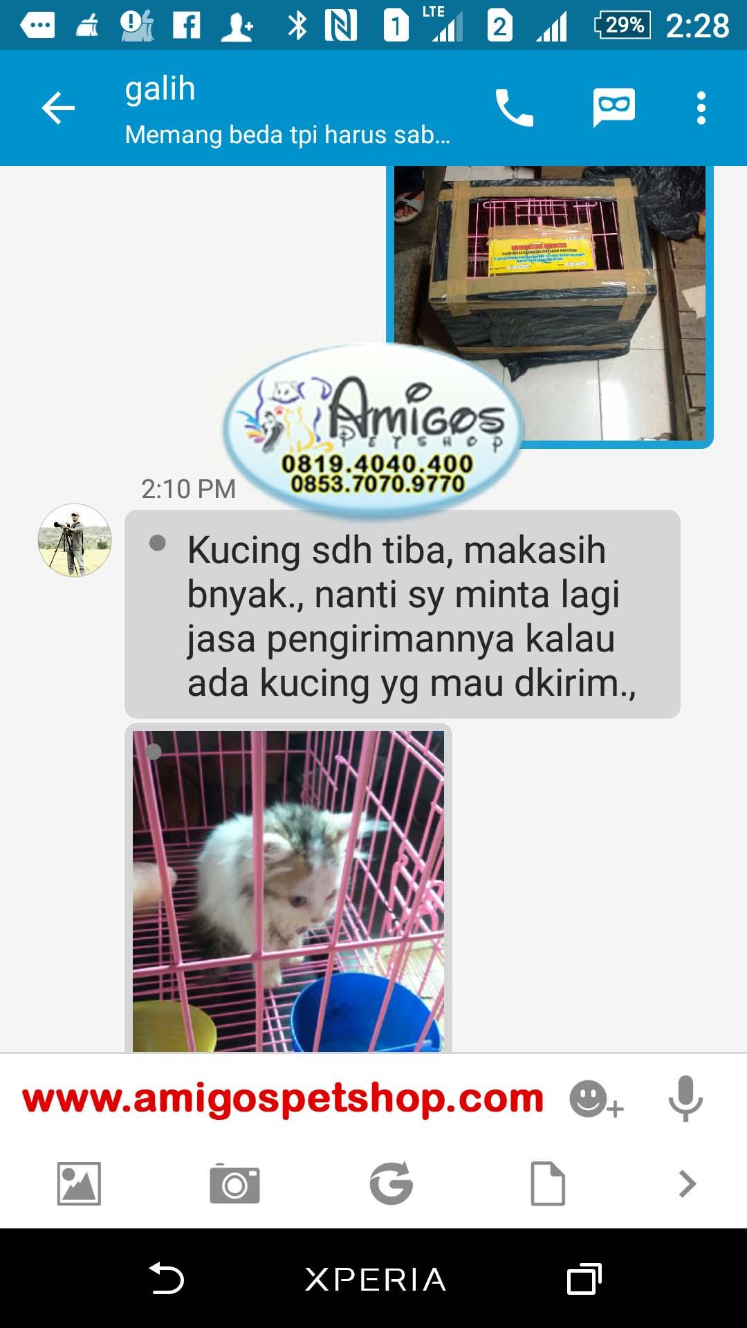 Testimoni pengiriman kucing