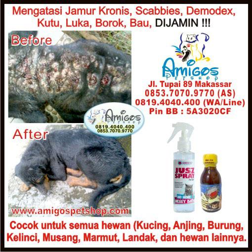 Obat Jamur, obat demodex, Luka, Borok, Ringworm, Scabbies