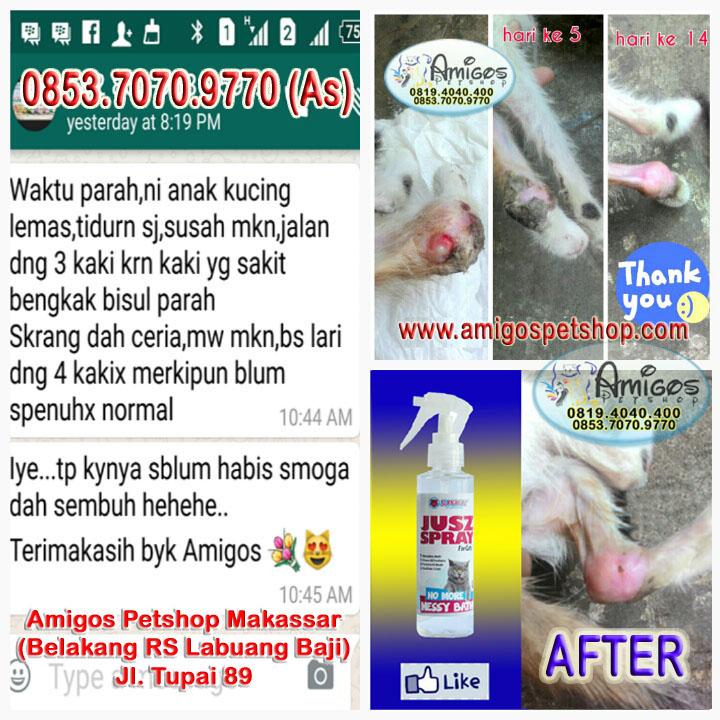 Amigos Petshop Mksr - Amigos Petshop Makassar - 085370709770 - 08194040400 - Jl Tupai 89 - After