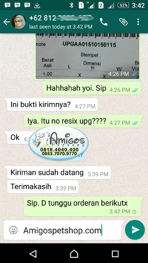 Testimoni Amigos Petshop Makassar