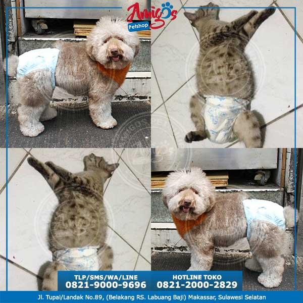 Pampers-Anjing-dan-Kucing-Ukuran-S-20-30cm-Amigos-PetShop-Makassar