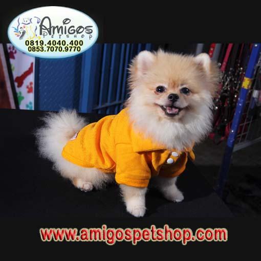 Anjing Minipom, jual beli anjing murah